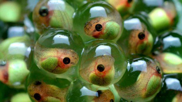 eitjes en kikkervisjes, sexuele opvoeding kinderen