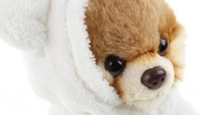 Boo the cutest dog in the world, boo hondje, knuffelhond