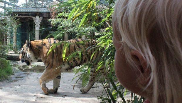 Dierenpark Amersfoort review
