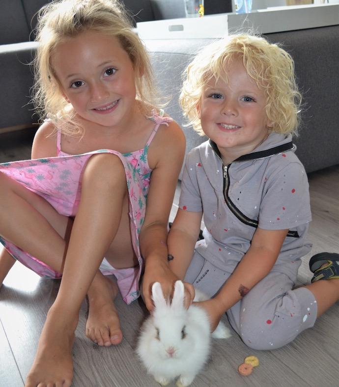 konijn, huisdier, wit konijn, konijn als huisdier